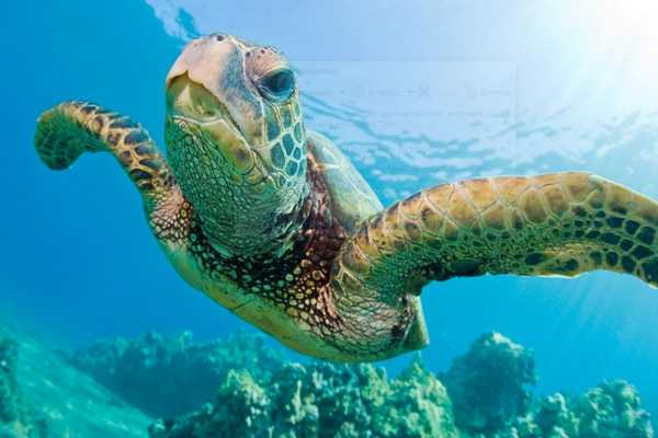 turtle1